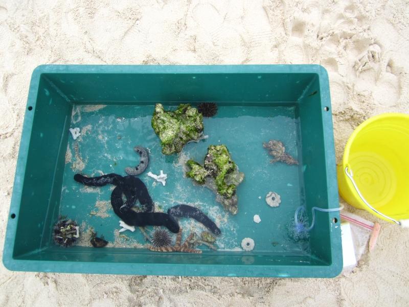 小さな沖縄の海