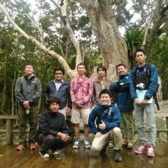 サキシマウオウの木