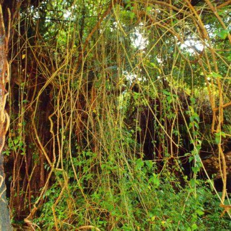 亜熱帯植物