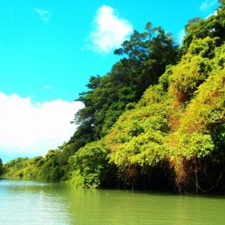 比謝川の自然