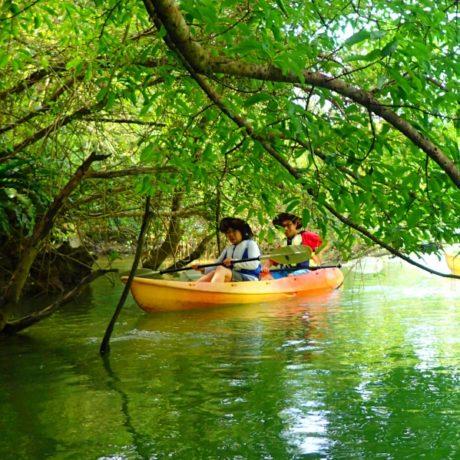 亜熱帯の森を楽しむ
